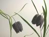 slika-1_preparirani-rastlini